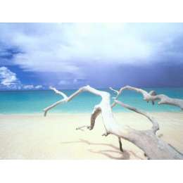 "Ian Cumming photo on canvas ""driftwood, Antigua"""