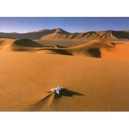 "David Norton photo on canvas ""Oryx Bone, Namib Desert"""