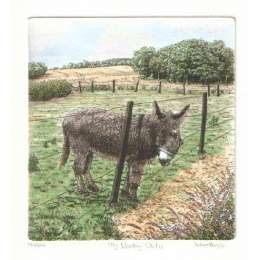 Laura Boyd hand coloured etching 'My Donkey Oatie'