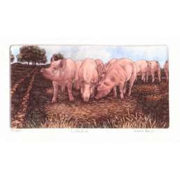 Laura Boyd hand coloured etching 'In the Pink'