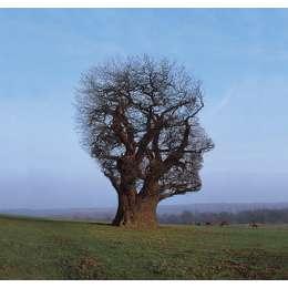 "Storm Thorgerson signed silkscreen print ""Tree Of Half Life"""