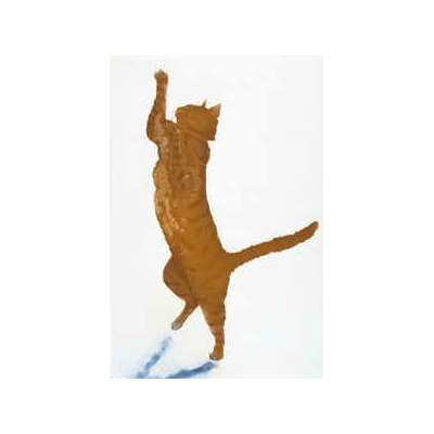 """Sonie Rollo signed limited edition etching """"Cat Dance"""""""