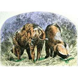 """Simon Bull hand coloured Etching """"Heads & Tails"""""""