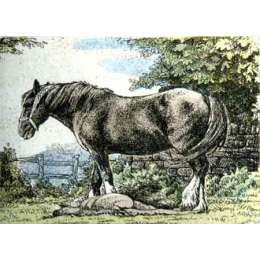 "Simon Bull hand coloured Etching ""Mare & Foal"""