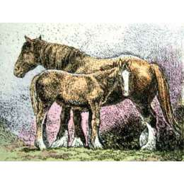 "Simon Bull hand coloured Etching ""Mare & Foal II"""