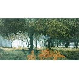 limited edition etching 'Dawn Glade'