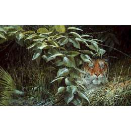 John Seery-Lester colour reproduction 'The Rain Tiger'