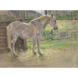 "Malcolm Coward oil on canvas ""Grey Pony in the Sunlight"""