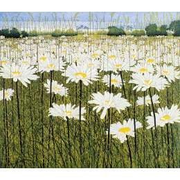 Phil Greenwood -  'Daisy'