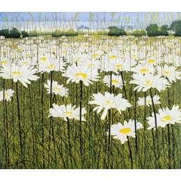 Phil Greenwood - 'Daisy'